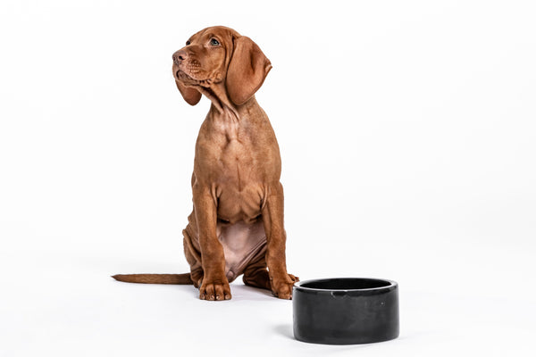 Dog & Cat Bowl Carrara Black Marble