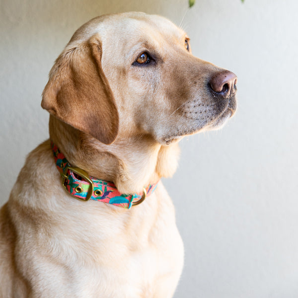 Anipal Clancy The Black Cockatoo Dog Collar