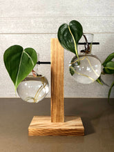 Load image into Gallery viewer, Wooden Multi-Level Propagation Station - Circular Glass Bulbs