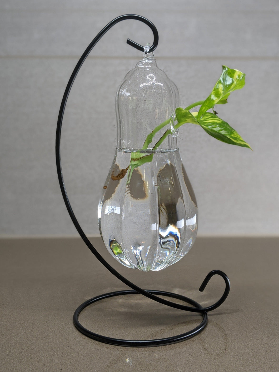 Squash Shaped Hanging Glass Terrarium and Propagation Stand