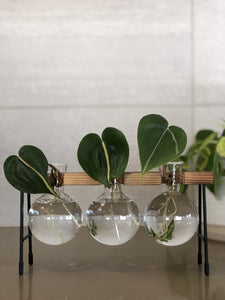 Wooden Plant Stand with Glass Bulb Vase | Propagation Station