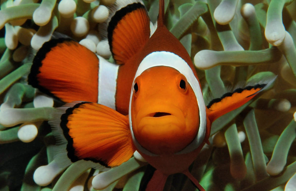 You Can Do This Nemo