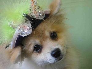 Light Green Feather, Silver Butterfly Purple Hat - Cat or Dog