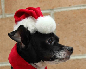 Christmas Santa Hat - Cat or Dog