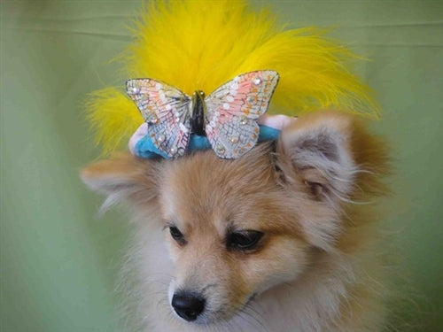 Yellow Feather Butterfly Teal Hat - Cat or Dog