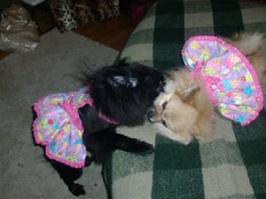 Bella & Toffie in their favorite Toni Mari outfits!