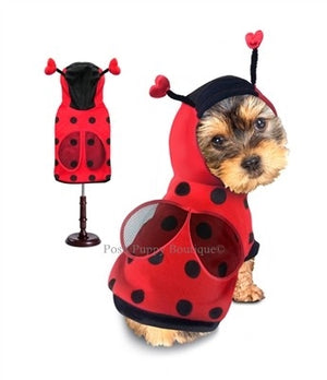 Lady Bug Costume