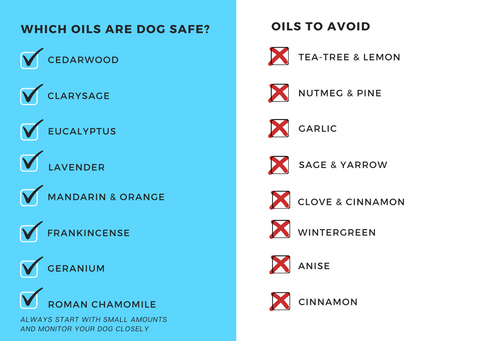 essential oils that are safe for dogs