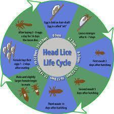 Electric Head Lice Exterminator