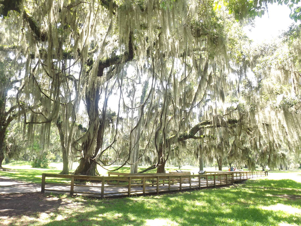 St Simons Island Historical Sites