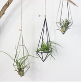 Geometric hanging planters add a playful and wonderful touch to your room design aesthetic