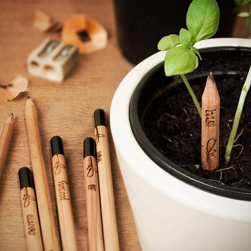Sprout plantable graphite pencils - 8 Pcs