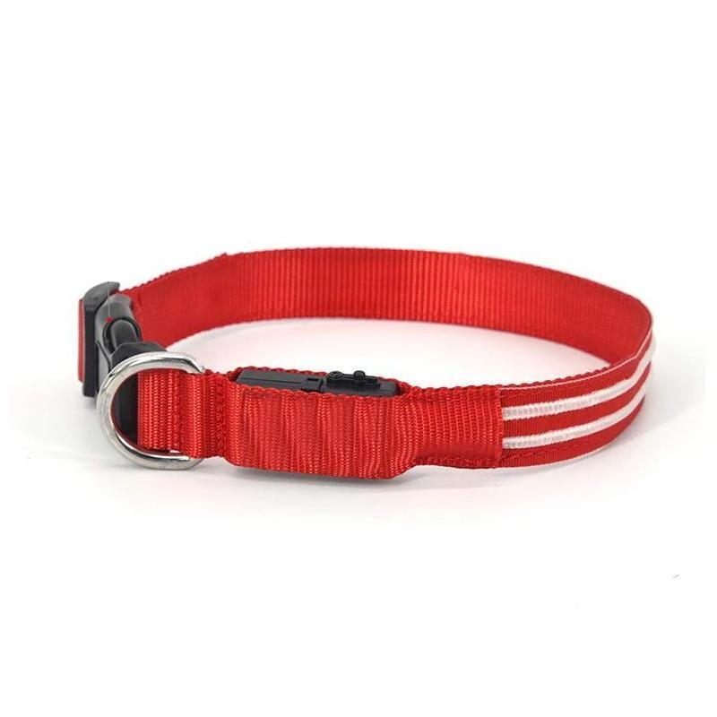 Dog LED Collars