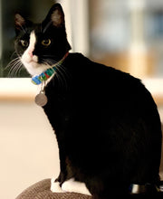 Load image into Gallery viewer, Groovy - Cat Collar