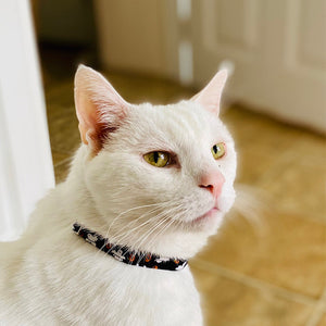 Casper - Cat Collar