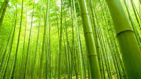 Bamboo Is For You