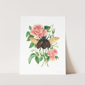 Stag Beetle and Rose Art Print