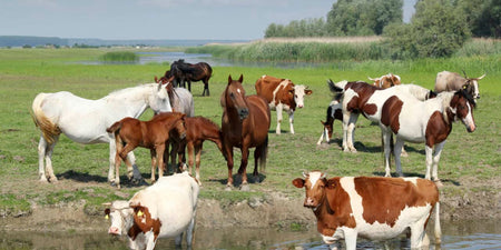 Horse & Cattle Supplies