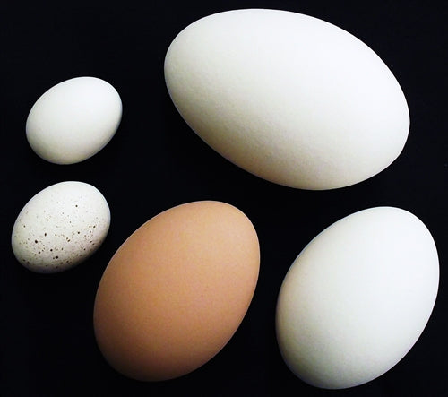 6 pack of Brown ceramic dummy chicken size eggs