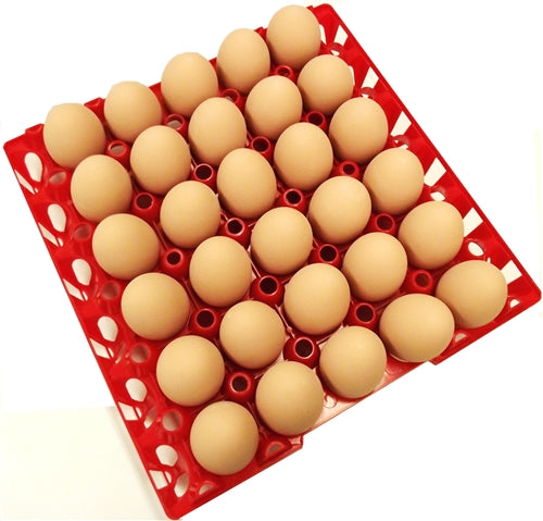 6 Pack of Rite Farm Products 30 Chicken Egg Poly Trays
