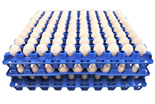 6 Pack of 90 Quail, Pigeon, Dove, & Bird Size Egg Trays