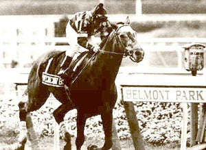 "Spectacular Bid ""At the Finnish Line"" 1980"