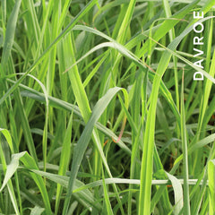 Davroe Natural Ingredients