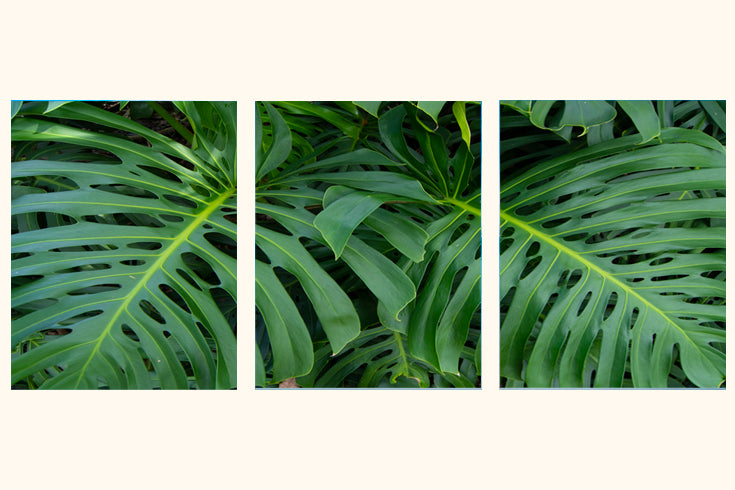 """Nature Vibes"" Triptych"