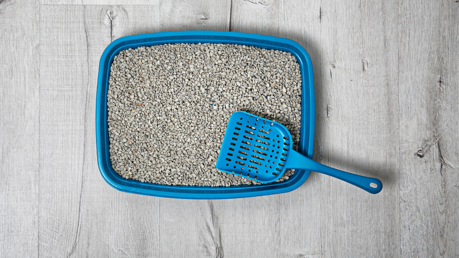 Blue cat litter pan filled with clay cat litter, with a blue cat litter scoop sitting on top.
