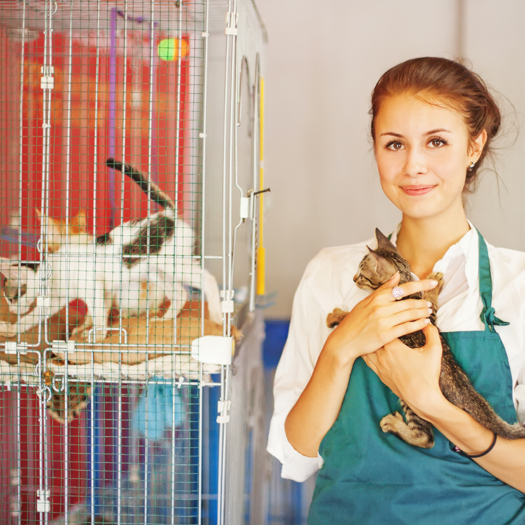 Animal shelter worker holds a kitten next to kittens in cages.
