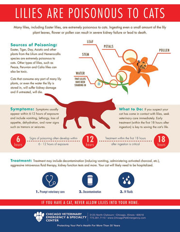 Lilies Poisonous to Cats Chart