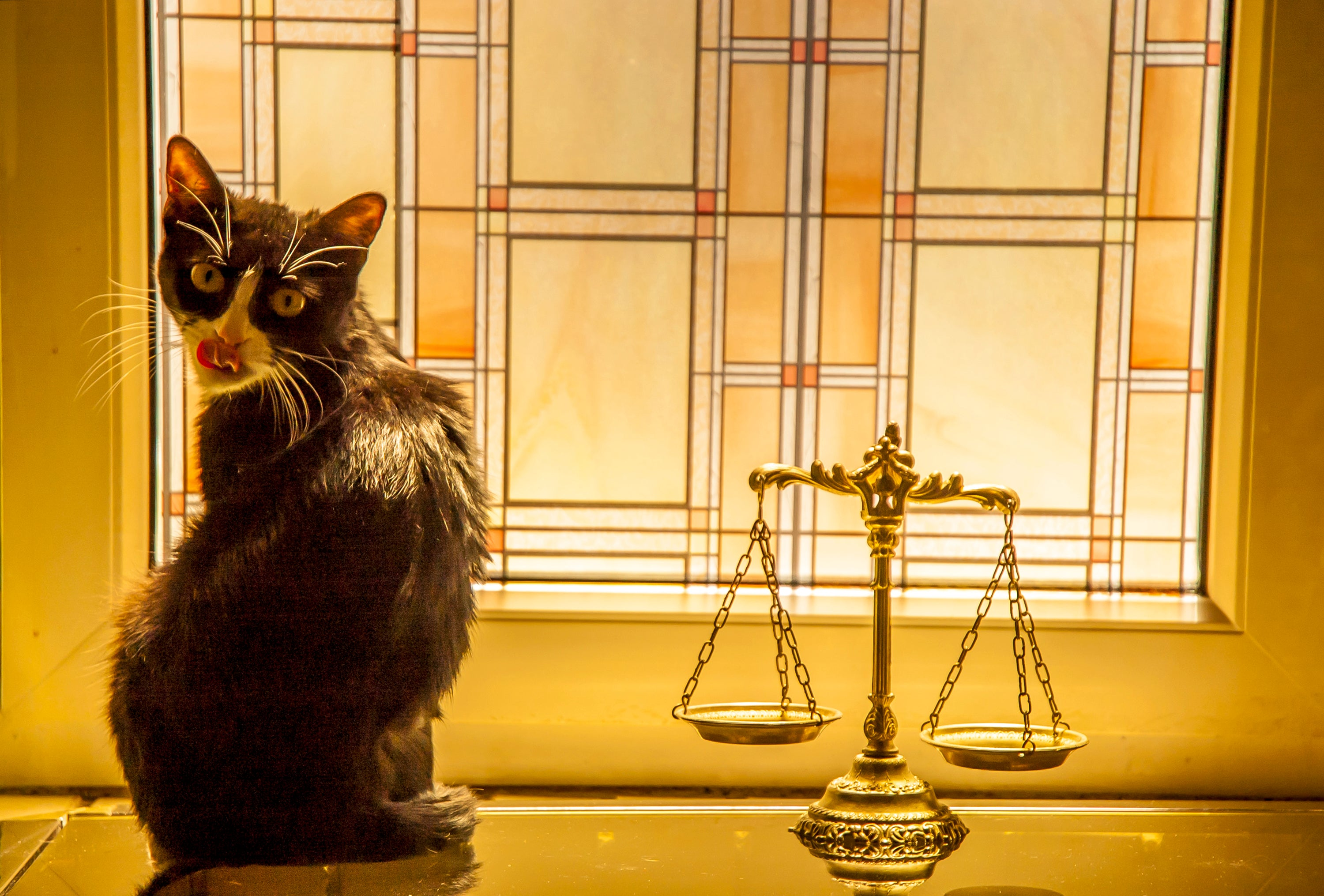 A black and white cat sitting next to the scales of justice.