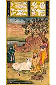 The Sufi with Cow