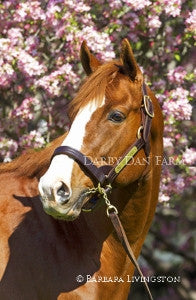 "Shackleford in Spring - 8x12"" Print"