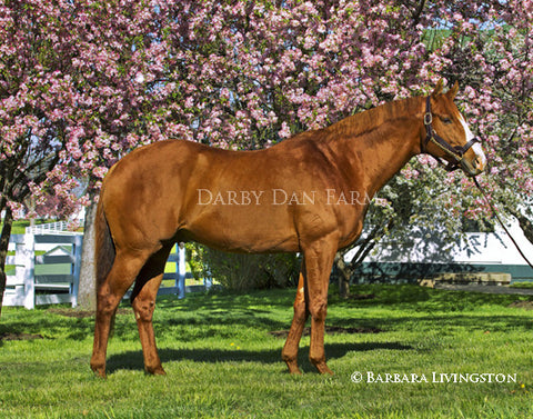"Shackleford Full Profile - 11x14"" Print"