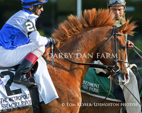"Shackleford ""Mohawk"" - 8x10"" Print"
