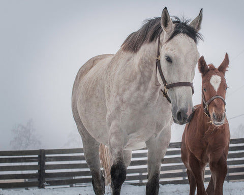 Winter Memories and First Foal on Artboard