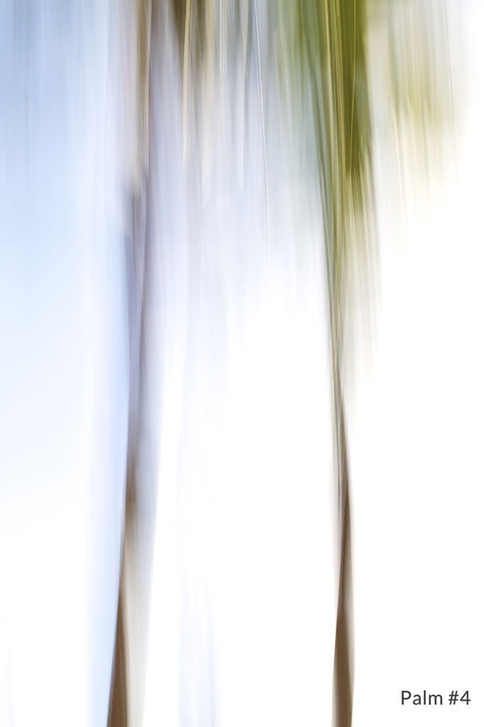Palm #4 from the Andaz Series 1 by Shane Robinson