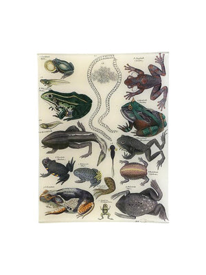 Frogs 10 x 13 Inch Rect. Tray