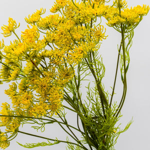 Load image into Gallery viewer, Wild Queen Anne's Lace Spray 33""