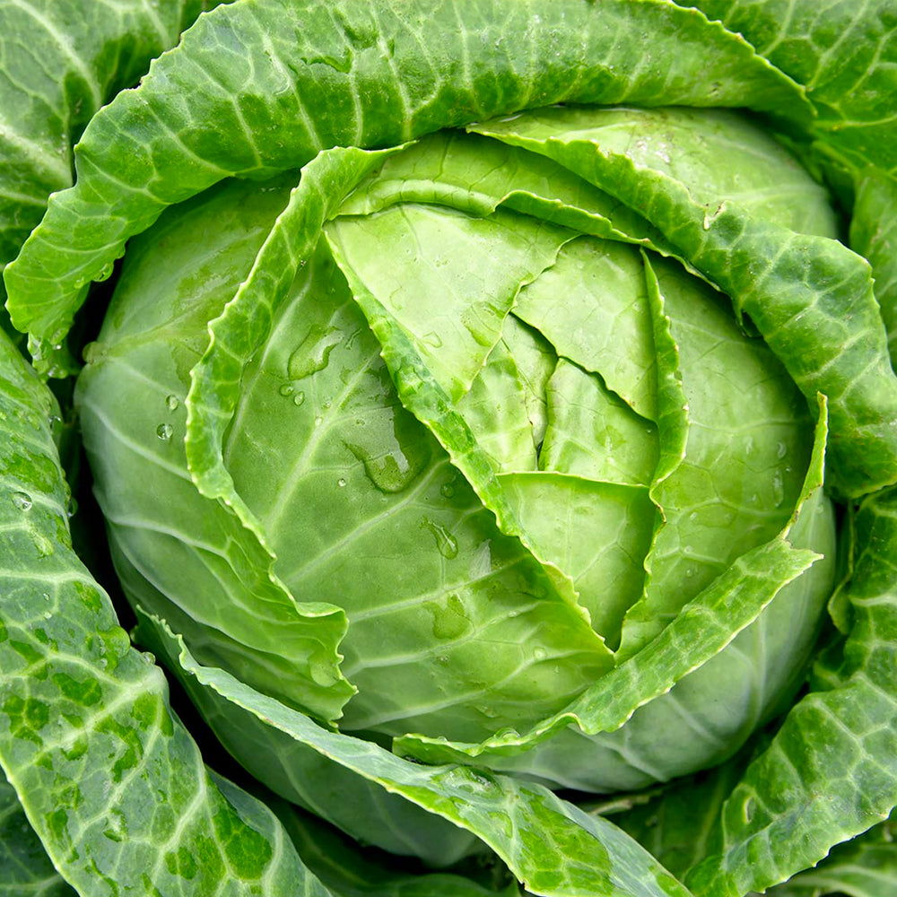 Prostate Health Habits – Today Choose Cabbage!