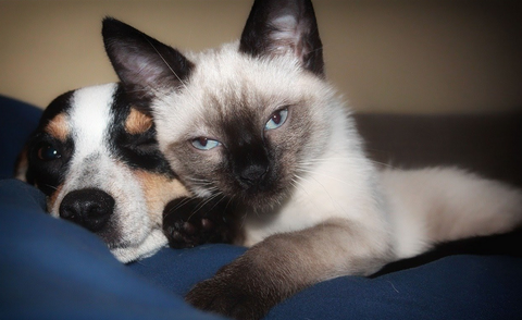 Respiratory distress in dogs and cats