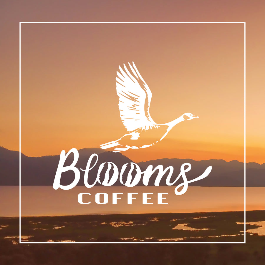 Bloom's Coffee- Honey Process