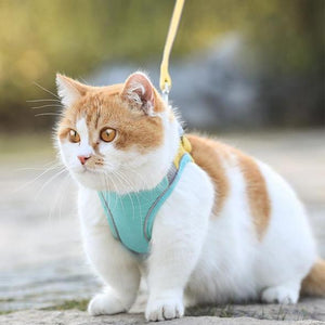 50% OFF - Cat Vest Harness And Leash Set