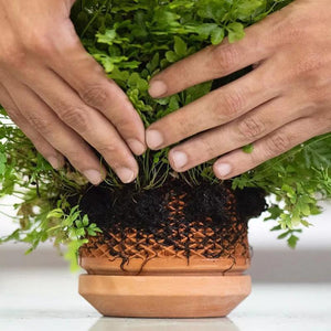 An inside-out Hydroponic Planter-Terraplanter