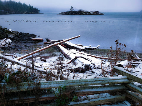 Indian Island Orcas Snow on solstice