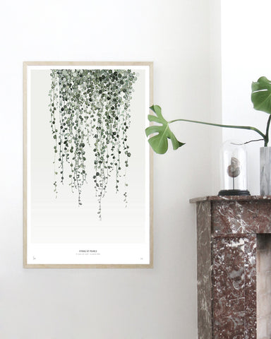 Botanics /  String of Pearls