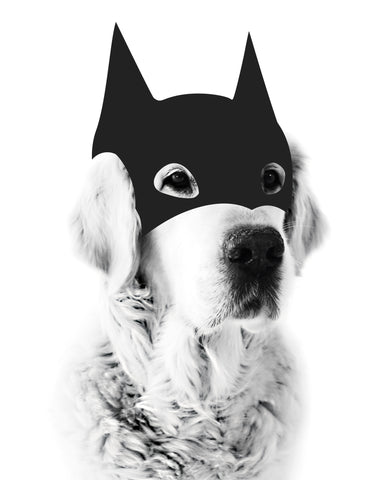 Hero  // BatDog