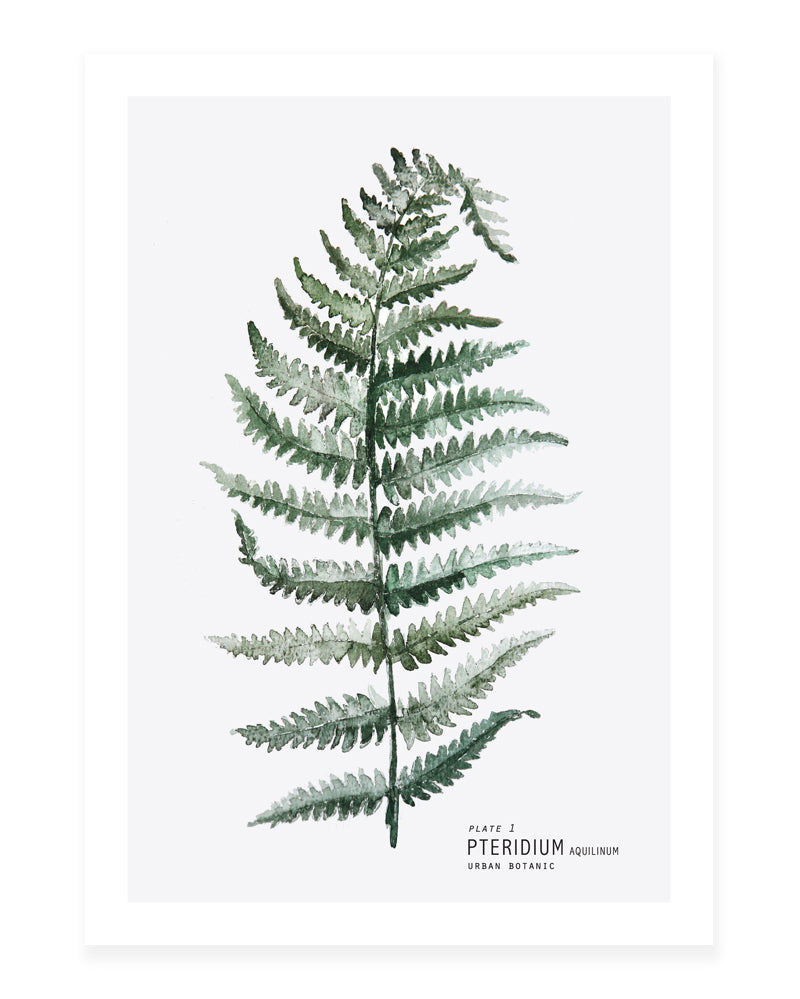 A5 Mini art print - Fern