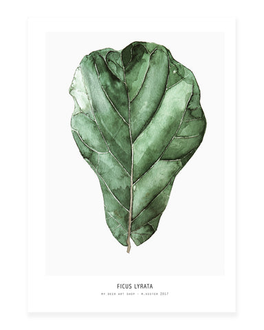 A5 Mini art print - Ficus